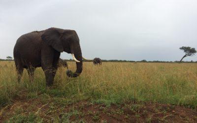 Un safari en fractionnés
